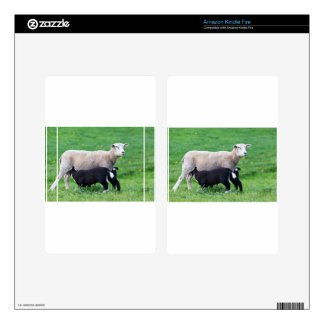 White mother sheep with two drinking black lambs kindle fire skin