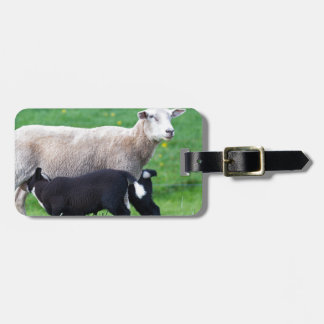 White mother sheep with two drinking black lambs luggage tag
