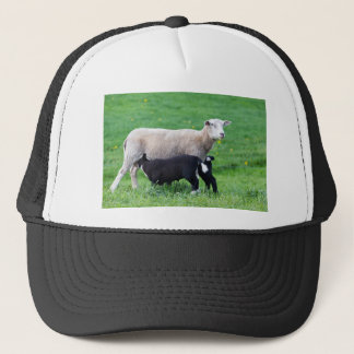 White mother sheep with two drinking black lambs trucker hat