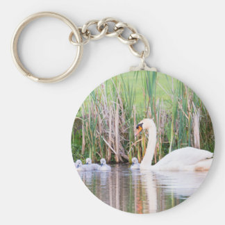 White mother swan swimming with chicks keychain