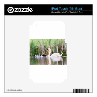 White mother swan swimming with chicks skins for iPod touch 4G