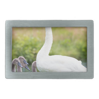 White mother swan with young chicks belt buckle