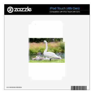 White mother swan with young chicks decal for iPod touch 4G