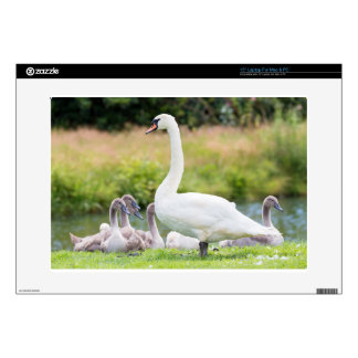 White mother swan with young chicks laptop decal