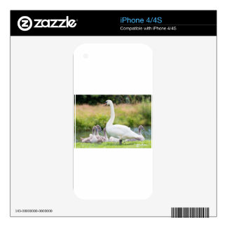 White mother swan with young chicks skin for the iPhone 4