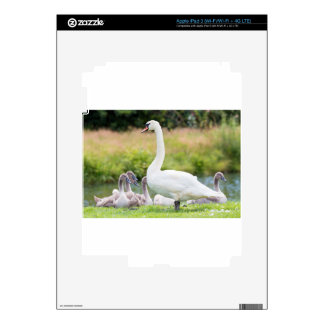 White mother swan with young chicks skins for iPad 3