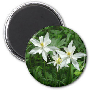 White mountain flowers refrigerator magnets zazzle white mountain flower magnet mightylinksfo