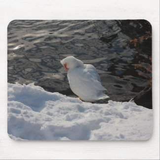 white Muscovy duck in the snow Mouse Pad