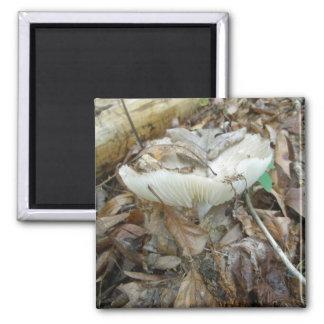 White Mushroom Coordinating Items Magnet
