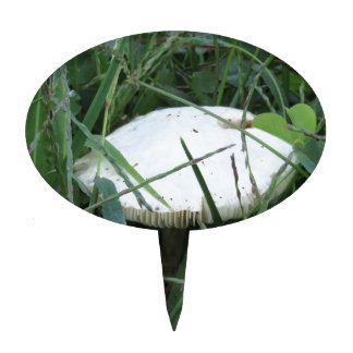 White mushroom on a green meadow cake topper