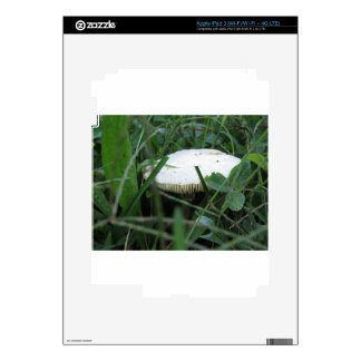 White mushroom on a green meadow iPad 3 decals
