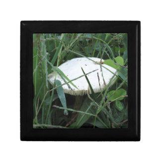 White mushroom on a green meadow keepsake box