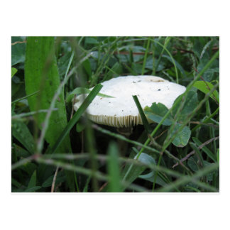 White mushroom on a green meadow postcard