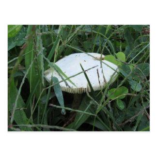 White mushroom on a green meadow postcard