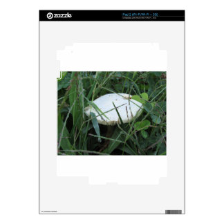 White mushroom on a green meadow skin for iPad 2