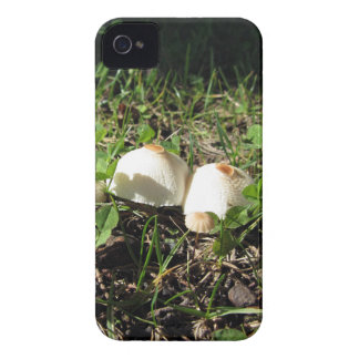 White mushrooms on green background iPhone 4 case