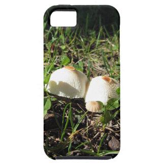 White mushrooms on green background iPhone SE/5/5s case