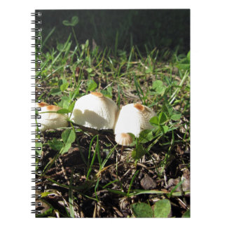 White mushrooms on green background notebook