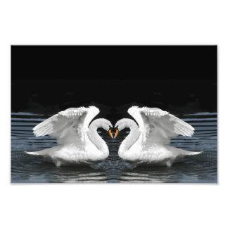White Mute Swan Mirror Image Art Photo