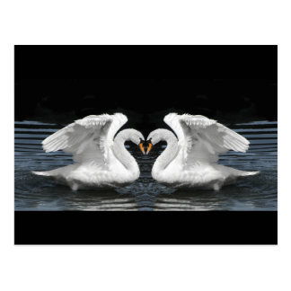 White Mute Swan Mirror Image Postcard