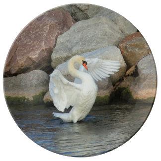 White Mute Swan Plate