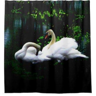 White Mute Swans