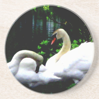White Mute Swans Drink Coaster