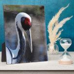 White Naped Crane Photo Plaques
