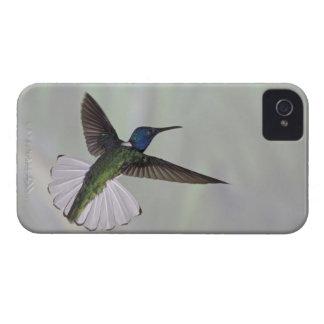 White-necked Jacobin Florisuga melivora Costa 2 Case-Mate iPhone 4 Case