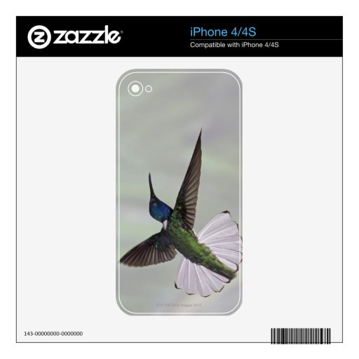 White-necked Jacobin Florisuga melivora Costa 2 Decal For The iPhone 4S