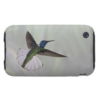 White-necked Jacobin Florisuga melivora Costa 2 Tough iPhone 3 Cover