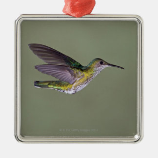 White-necked Jacobin Florisuga melivora Costa Metal Ornament