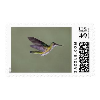 White-necked Jacobin Florisuga melivora Costa Stamp