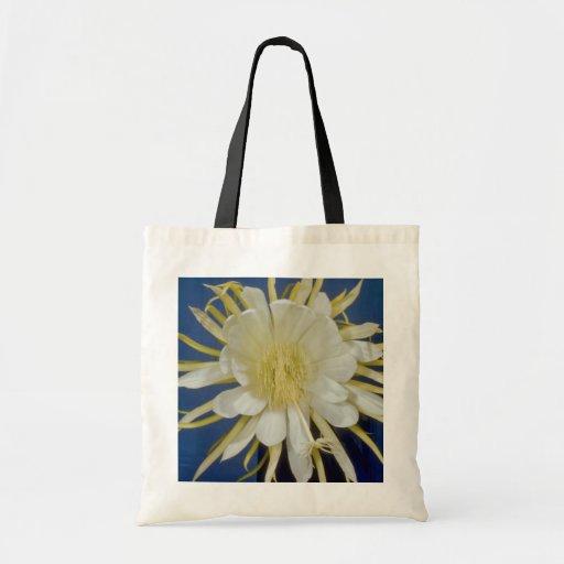 white Night blooming cereus (Hylocereus undatus) f Bags