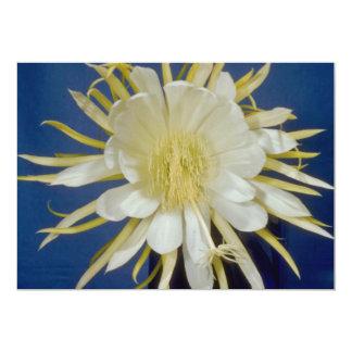 white Night blooming cereus (Hylocereus undatus) f 5x7 Paper Invitation Card