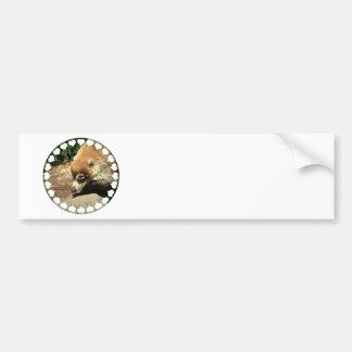 White Nosed Coati Bumper Sticker Car Bumper Sticker