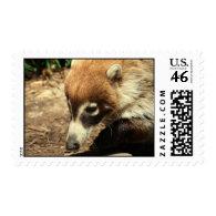 White Nosed Coati Postage Stamp