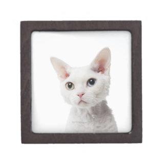 White odd-eyed cat 2 jewelry box