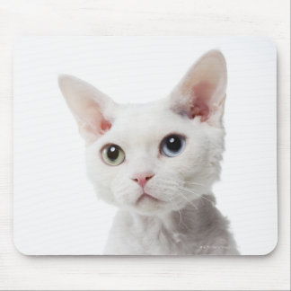 White odd-eyed cat 2 mouse pads