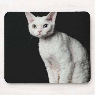 White odd-eyed cat 3 mouse pad