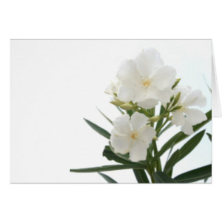 White Oleander Greeting Cards