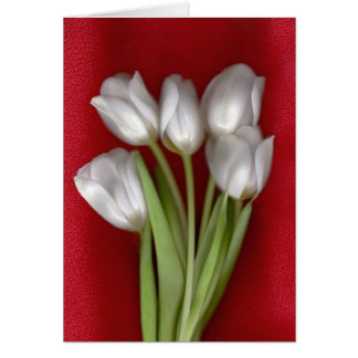 White on Red Greeting Cards