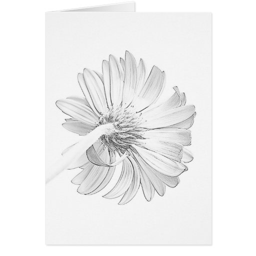 White on White II Greeting Cards