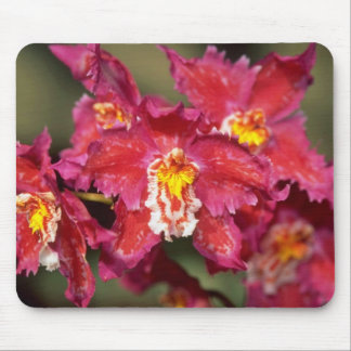 White Oncidium flowers Mouse Pad