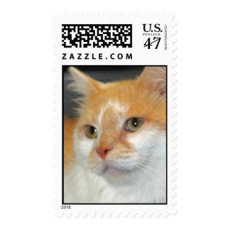 White/Orange American Shorthair Cat Postage Stamps
