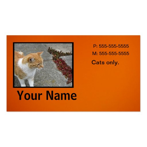 White Orange Cat Business Cards