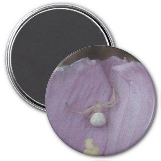 White Orb spider Magnet