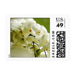 white orchid 1 postage stamps
