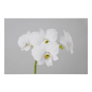 White Orchid (2) Poster