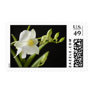 White Orchid (3) Postage Stamps